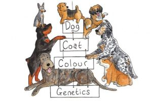 dog_coat_colour_genetics